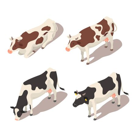 red heifer: Isometric 3d vector set of cows. Icon for web. Isolated on white background.