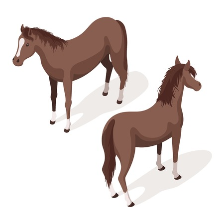 Isometric 3d vector illustration of brown sorrel horses. Back and front view. Icon for web. Isolated on white background.