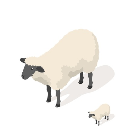 Isometric 3d vector illustration of sheep isolated on white background. Icon for web. Front view.