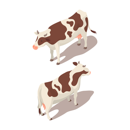 holstein: Isometric 3d vector illustration of cow. Back and front view.