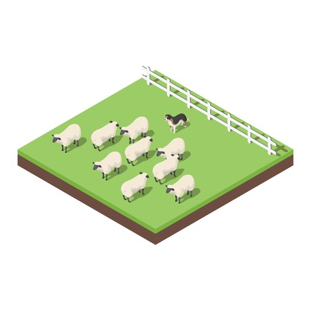 midwest: Isometric 3d vector illustration of farm animals. A dog herding the sheep. Icon for web. Isolated on white background.