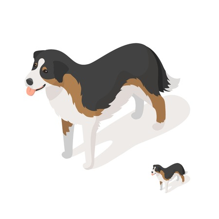 sheep dog: Isometric 3d vector illustration of sheep dog isolated on white background. Icon for web. Front view.