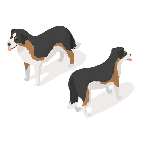 sheep dog: Isometric 3d vector illustration of sheep dog isolated on white background. Icon for web. Back and front view. Illustration