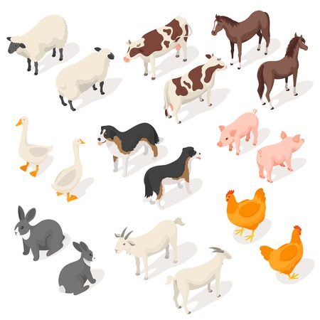 Isometric 3d vector set of farm animals. Back and Front view. Icon for web. Isolated on white background.