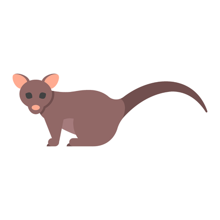 Vector flat style illustration of brushtail possum. Icon for web. Isolated on white background. Illustration