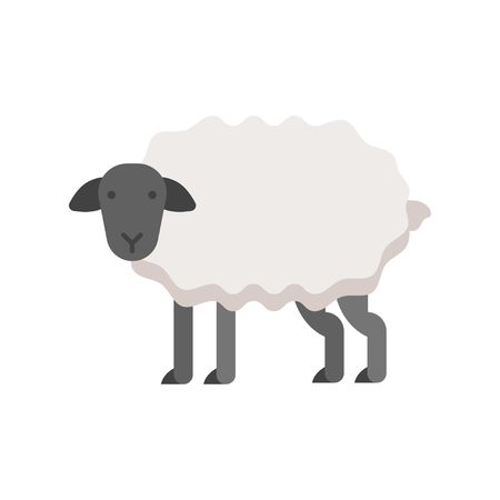 grazing: Vector flat style illustration of sheep. Icon for web. Isolated on white background.