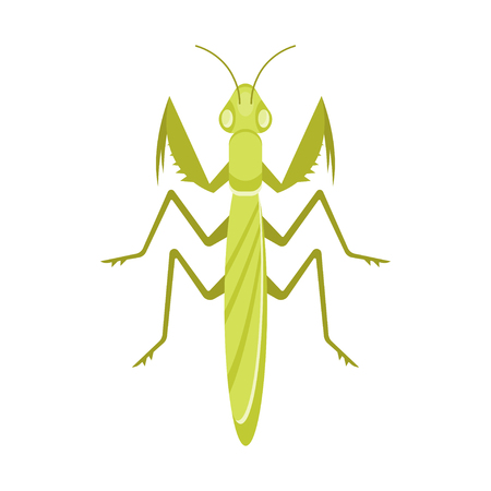 Vector flat style illustration of mantis. Icon for web. Isolated on white background.