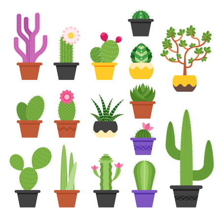 Vector flat colorful set of various cactus in pots. Icon for web. Isolated on white background