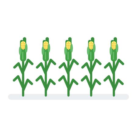 Vector flat style illustration of corn. Icon for web. Isolated on white background. Illustration