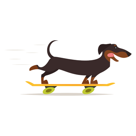 Vector cartoon style illustration of cute dachshund dog riding skateboard, isolated on white background.