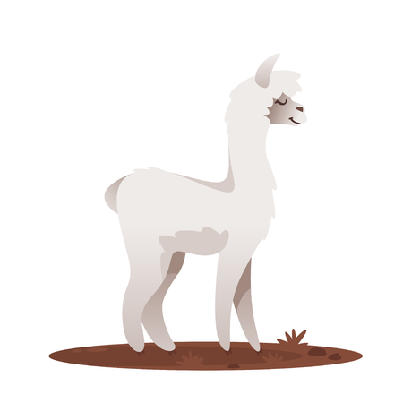 Vector cartoon style illustration of lama, isolated on white background.