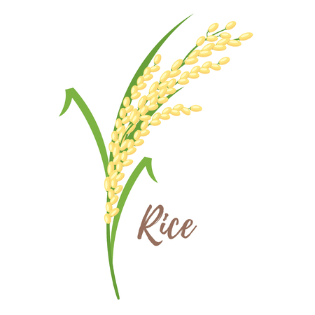 Vector cartoon style illustration of rice isolated on white background. 向量圖像