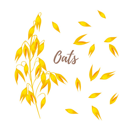 Vector cartoon style illustration of oats and seeds.