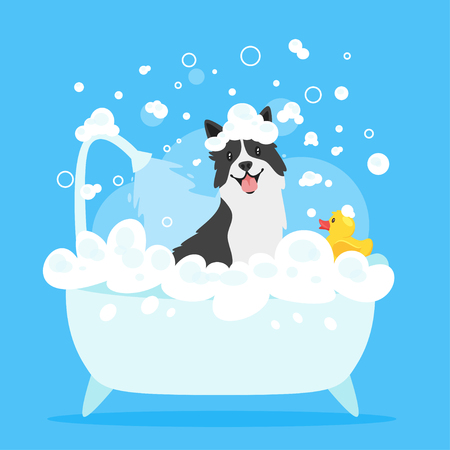 Vector cartoon style illustration of cute border collie dog taking a bath full of soap foam. Yellow rubber duck in bathtub. Grooming concept. Blue background.