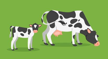 Vector cartoon style illustration of farm animals - cow with calf. Isolated on green background.