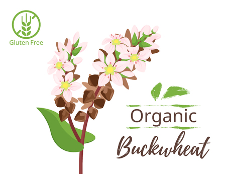 Vector cartoon style illustration of cereals - buckwheat. Grain plant isolated on white background. Design for gluten free organic products.