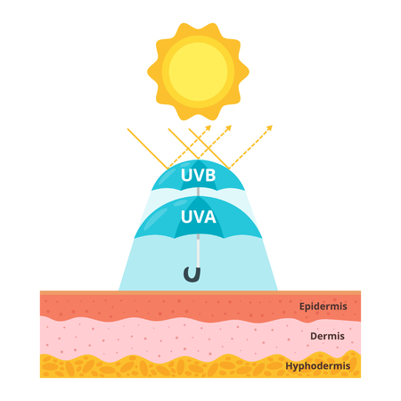 cartoon style illustration of uvb and uva protection for skin. Umbrella protects from sun rays. Uv shield concept.