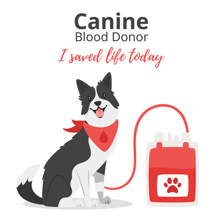 Vector cartoon style background of pet donate blood concept. Donor day. Motivational poster. Dog sitting near blood bag.