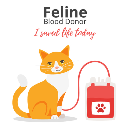 Vector cartoon style background of pet donate blood concept. Donor day. Motivational poster. Cat sitting near blood bag.