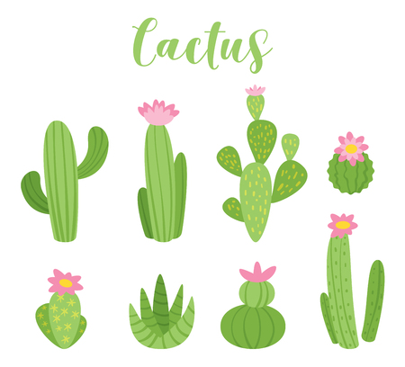 Cute cactus vector illustration for any purposes. Green plant design, isolated on white background. Vettoriali
