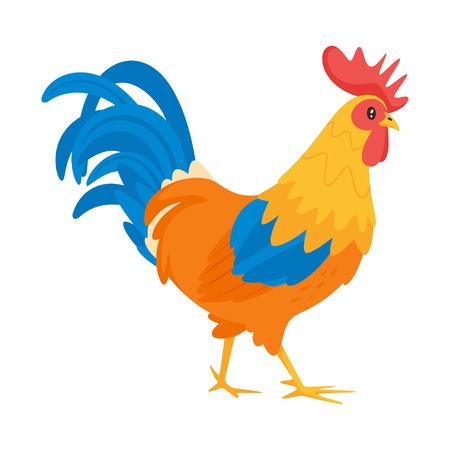 Rooster vector illustration isolated on white background.