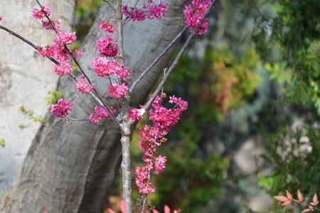 Pink Flower Tree Stock fotó