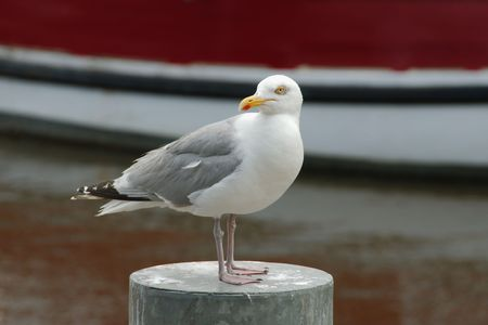 metal pole: Seagull standing on a metal pole with a boat in the background Stock Photo
