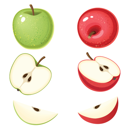 Vector illustration of organic green and red apple with slices isolated on white background
