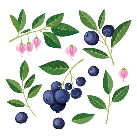 Blaubeeren Satz von Elementen. Abbildung auf weißem Hintergrund. Vektorgrafik