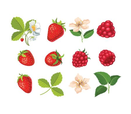 Set with strawberries and raspberries. Flowers and leaves of strawberries and raspberries.