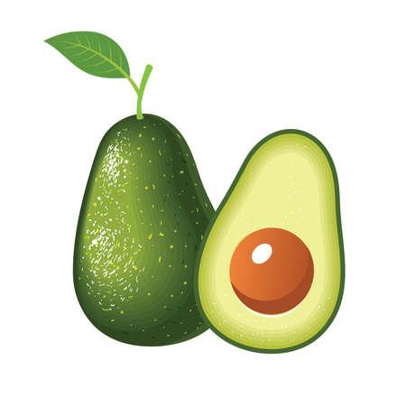 Realistic vector avocados illustration. Whole and half avocado isolated on white background. Vektoros illusztráció