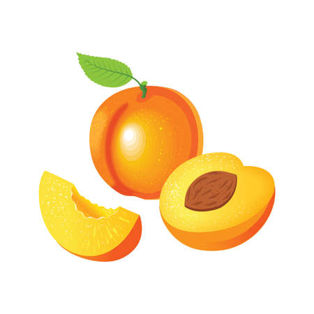 Set with whole apricots and pieces of apricots on a white background. Vector illustration. Vetores