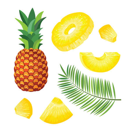 Set with whole pineapple and pineapple pieces, pineapple palm leaves. Vector illustration.