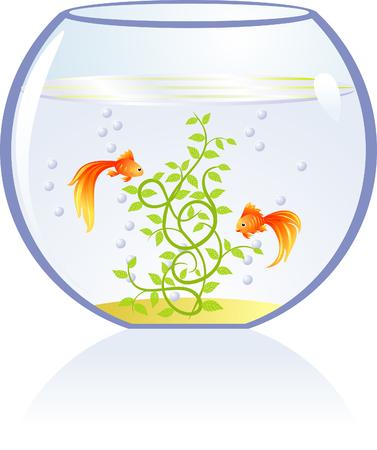 gold fish bowl: Gold fishes in aquarium Illustration