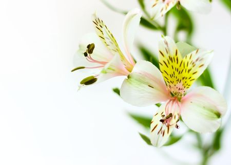 Flower background for your design