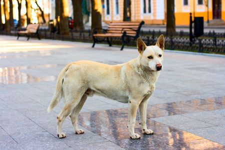 Dog on the street for your desifn photo