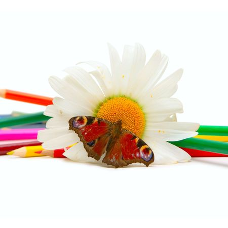 Butterfly, chamomille and color pencils isolated on white photo