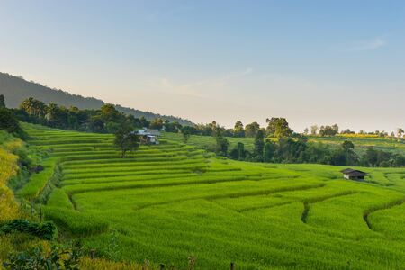 Chiang Mai rice terrace in the morning, Thailand