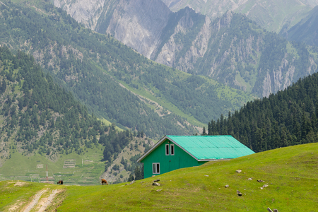 india cow: Green house at Sonamarg, India