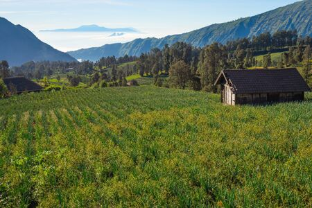Beautiful scenery of Cemoro Lawang village in a morning, Bromo mountain, East Java, Indonesia, Asia