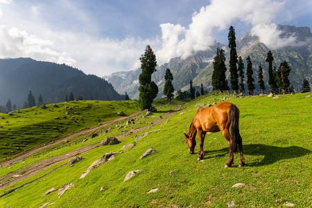 Beautiful scenery of Sonamarg in summer season, Jammu Kashmir, India, Asia