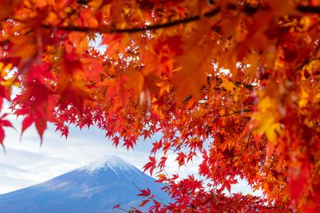 Red maple with Fujisan mountain in background in autumn season, Kanto, Japan, Asia 版權商用圖片