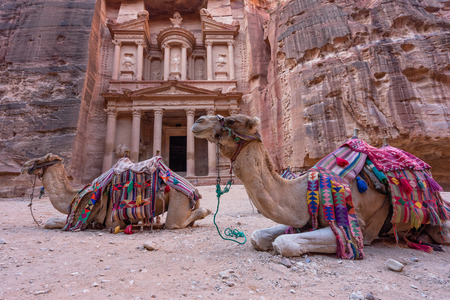 Camel sit in front of The Treasury (Al Khaneh) in Petra ancient city, Jordan, Middle east, Asia