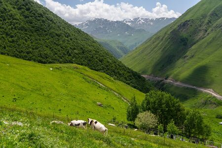 Greeny or summer season in Juta valley, Caucasus mountain range in Georgia, Asia 版權商用圖片