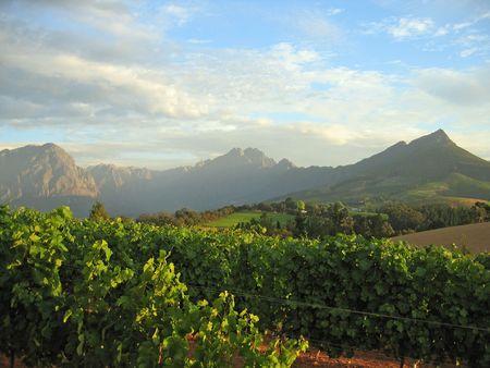 Stellenbosch Vineyard Reklamní fotografie