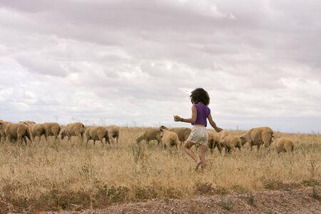 herding: Young caucasian girl herding sheep across wheat field.