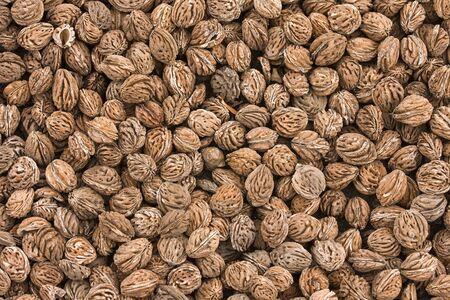 pips: Achtergrond collectie van zeer getextureerde abrikoos pitten.  Stockfoto