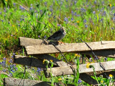 Bird sitting on wood fencing