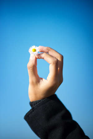 One hand holding a single daisy flower against blue sky photo