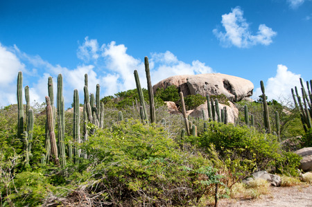 Cactus growing on the Ayo Rock formations, a group of monolithic rock boulders near Ayo village in Aruba in the Caribbean